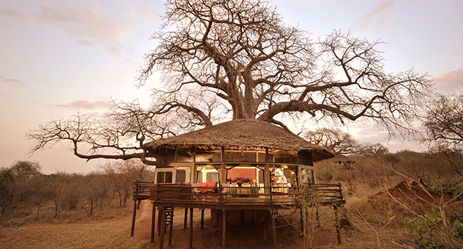 elewana_collection_tarangire_treetops_650x350_web
